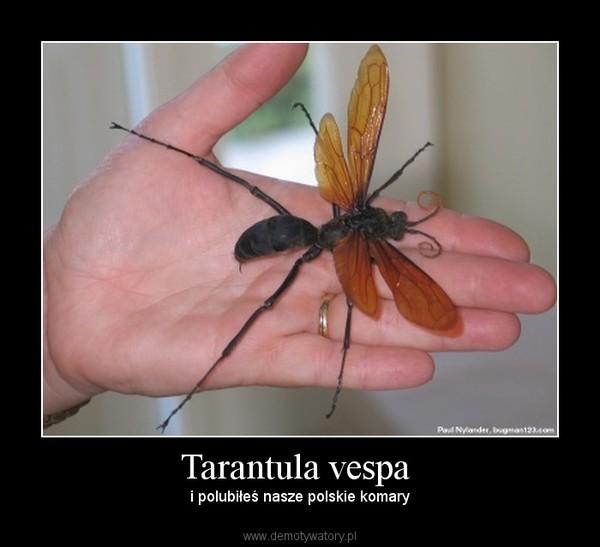 Tarantula vespa  – i polubiłeś nasze polskie komary