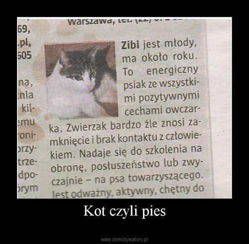 Kot czyli pies