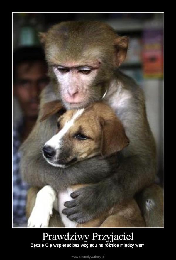 Prawdziwy Przyjaciel – Będzie Cię wspierać bez względu na różnice między wami