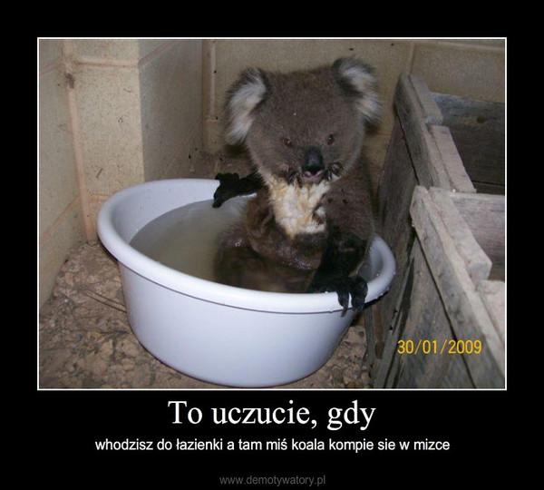 To uczucie, gdy – whodzisz do łazienki a tam miś koala kompie sie w mizce