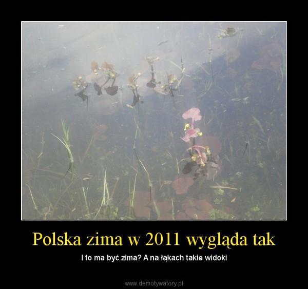 Polska zima w 2011 wygląda tak – I to ma być zima? A na łąkach takie widoki