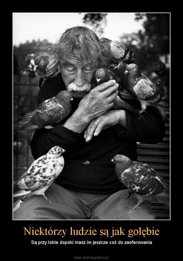 Niektórzy ludzie są jak gołębie – Są przy tobie dopóki masz im jeszcze coś do zaoferowania