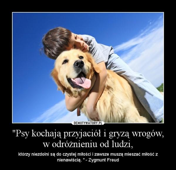 """""""Psy kochają przyjaciół i gryzą wrogów, w odróżnieniu od ludzi, – którzy niezdolni są do czystej miłości i zawsze muszą mieszać miłość z nienawiścią. """" - Zygmunt Freud"""