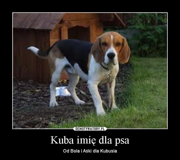 Kuba imię dla psa – Od Bola i Aśki dla Kubusia