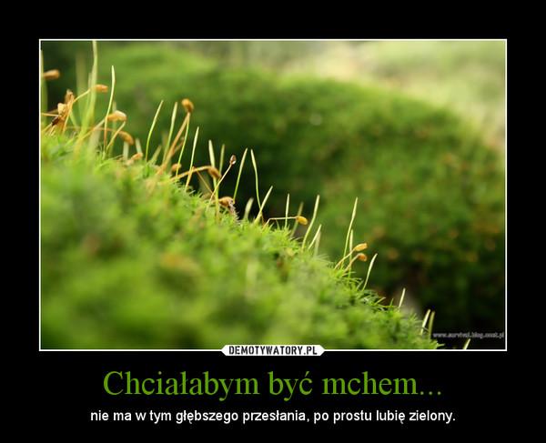 Chciałabym być mchem... – nie ma w tym głębszego przesłania, po prostu lubię zielony.