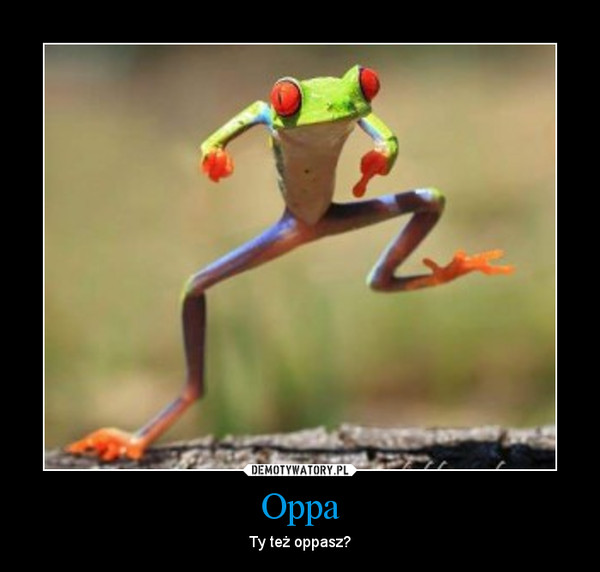 Oppa – Ty też oppasz?