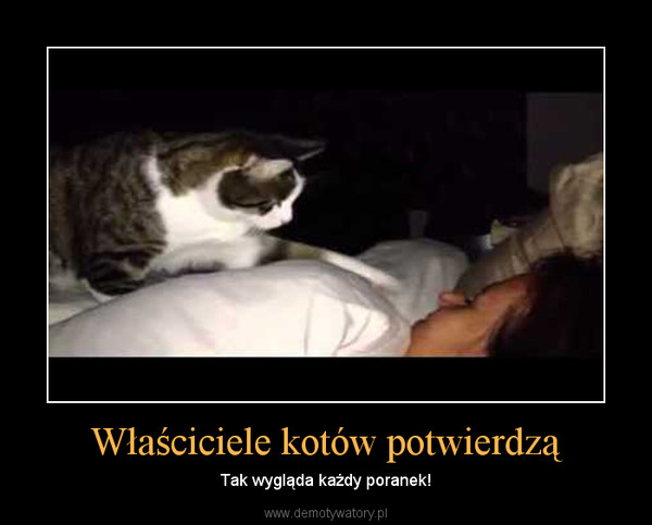 Whiskases Demotywatorypl