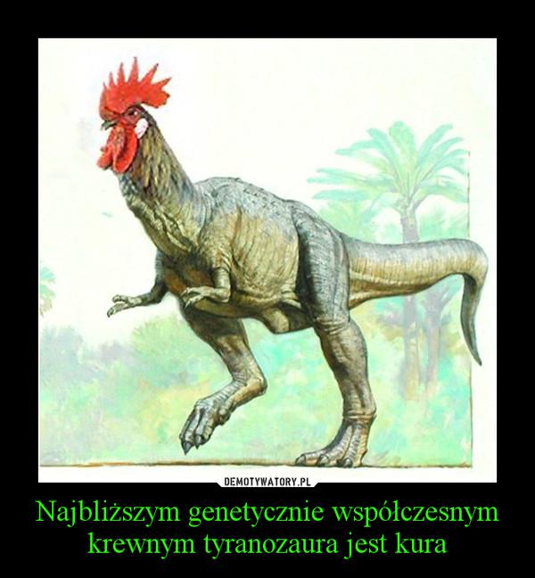 Najbliższym genetycznie współczesnym krewnym tyranozaura jest kura –