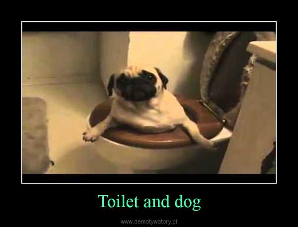 Toilet and dog –