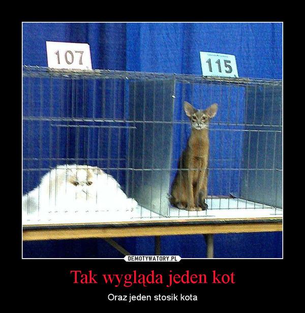 Tak wygląda jeden kot – Oraz jeden stosik kota