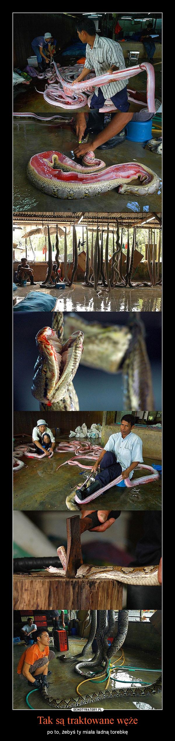 Tak są traktowane węże – po to, żebyś ty miała ładną torebkę