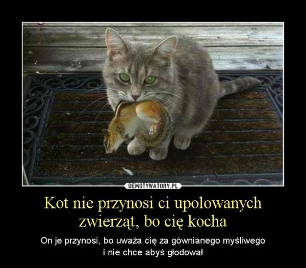 Kot nie przynosi ci upolowanych zwierząt, bo cię kocha – On je przynosi, bo uważa cię za gównianego myśliwegoi nie chce abyś głodował