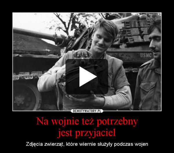 Na wojnie też potrzebnyjest przyjaciel – Zdjęcia zwierząt, które wiernie służyły podczas wojen