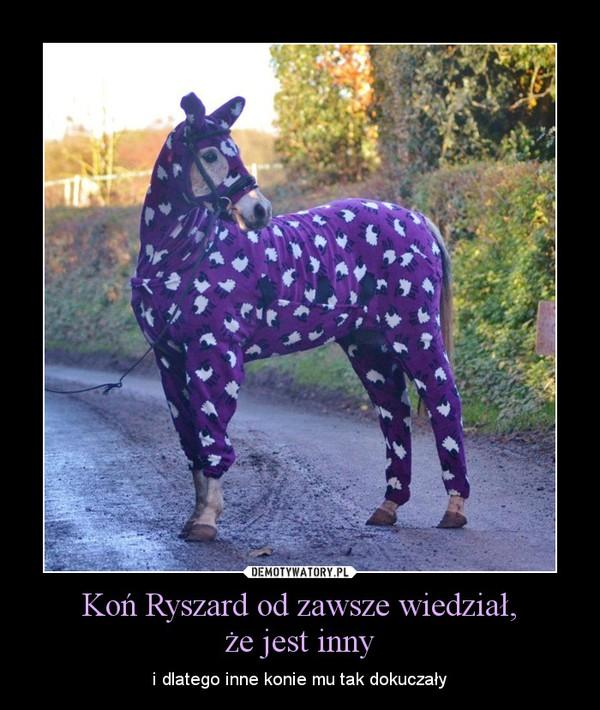 Koń Ryszard od zawsze wiedział,że jest inny – i dlatego inne konie mu tak dokuczały