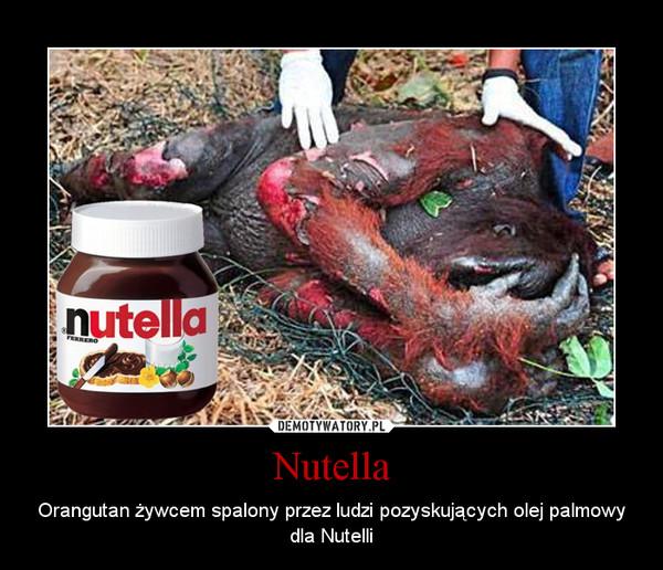 Nutella – Orangutan żywcem spalony przez ludzi pozyskujących olej palmowy dla Nutelli