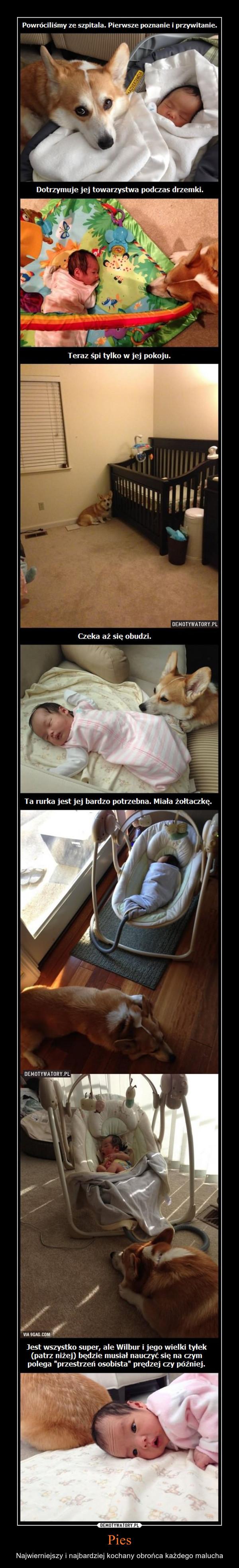 Pies – Najwierniejszy i najbardziej kochany obrońca każdego malucha