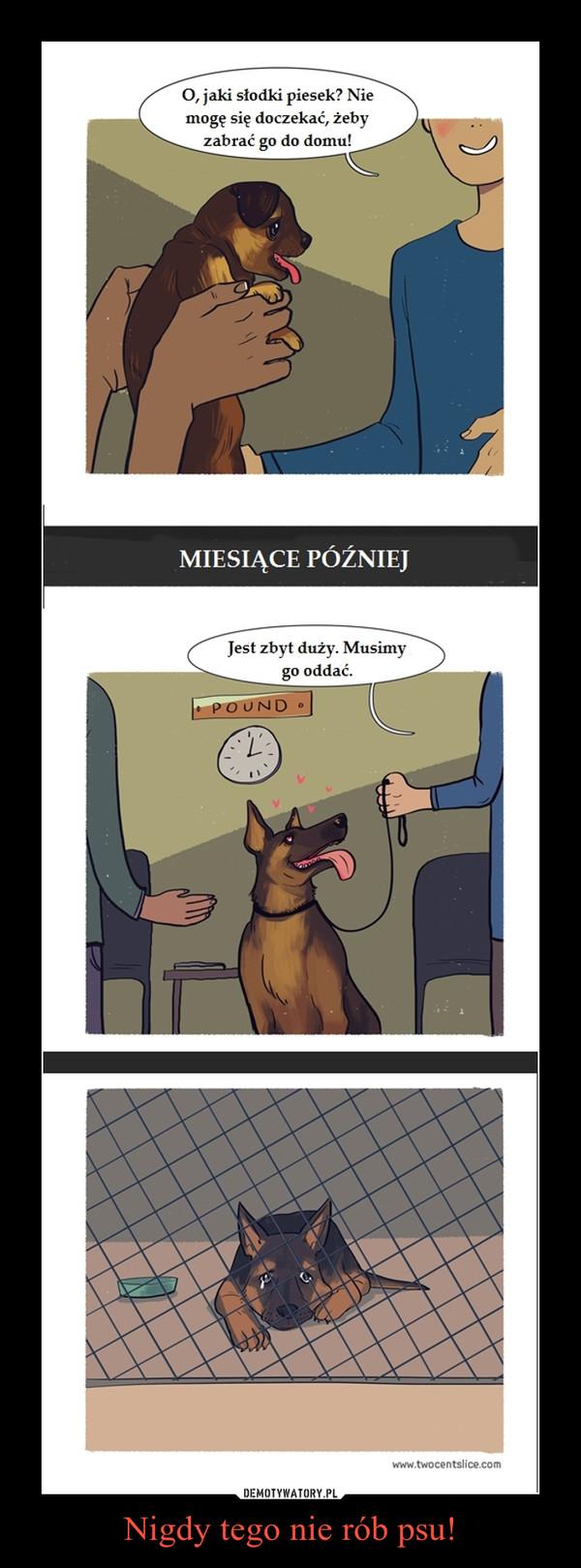 Nigdy tego nie rób psu! –