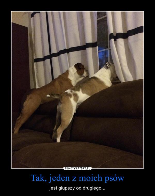 Tak, jeden z moich psów – jest głupszy od drugiego...