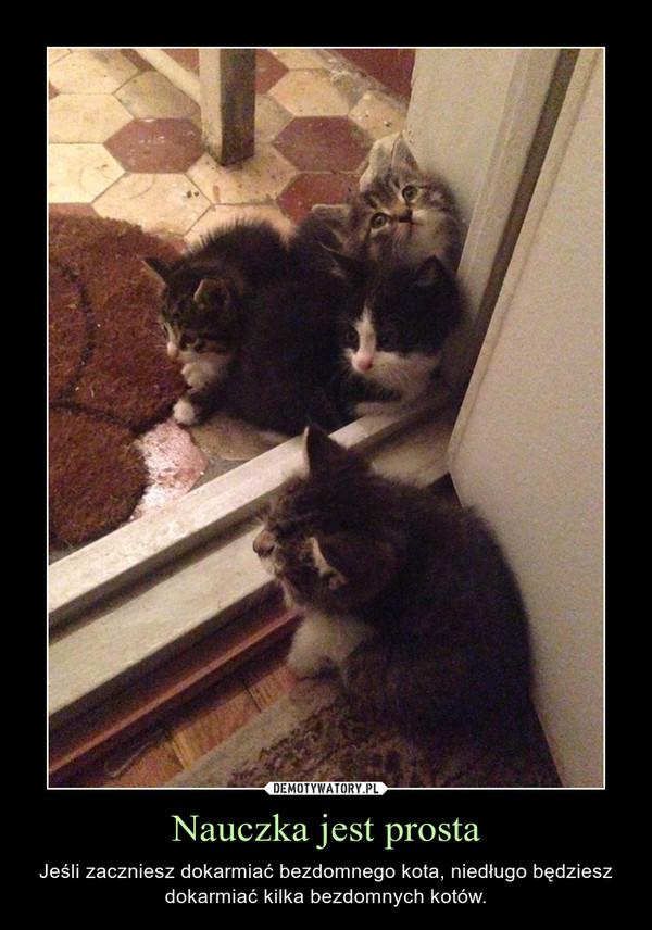 Nauczka jest prosta – Jeśli zaczniesz dokarmiać bezdomnego kota, niedługo będziesz dokarmiać kilka bezdomnych kotów.