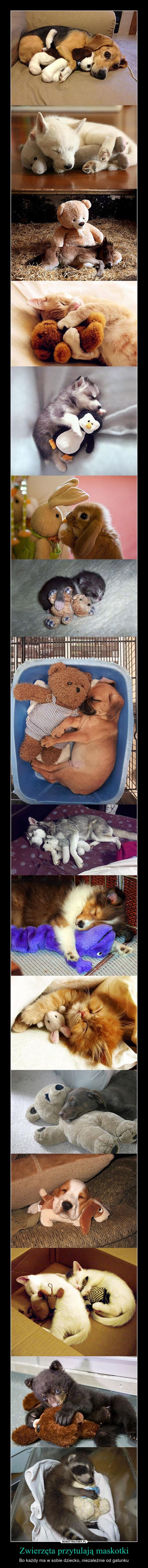 Zwierzęta przytulają maskotki – Bo każdy ma w sobie dziecko, niezależnie od gatunku