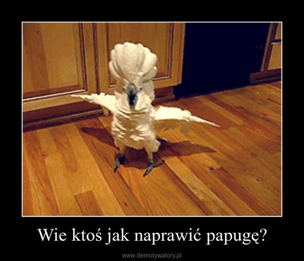 Wie ktoś jak naprawić papugę? –