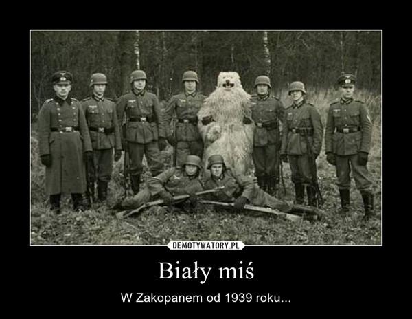 Biały miś – W Zakopanem od 1939 roku...