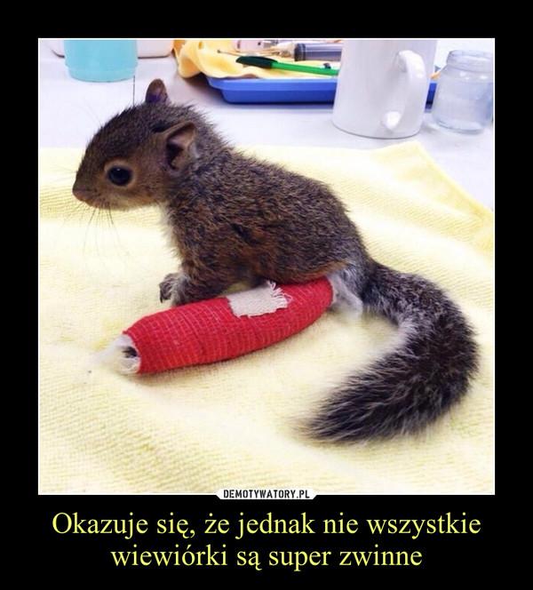 Okazuje się, że jednak nie wszystkie wiewiórki są super zwinne –