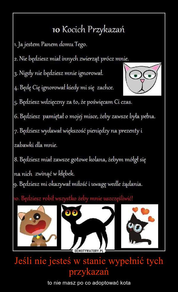Jeśli nie jesteś w stanie wypełnić tych przykazań – to nie masz po co adoptować kota