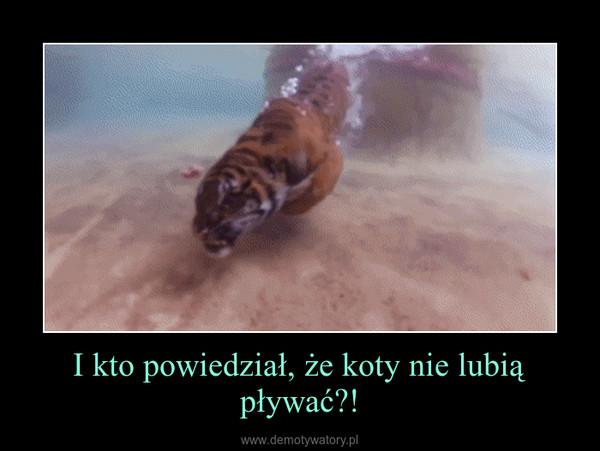 I kto powiedział, że koty nie lubią pływać?! –