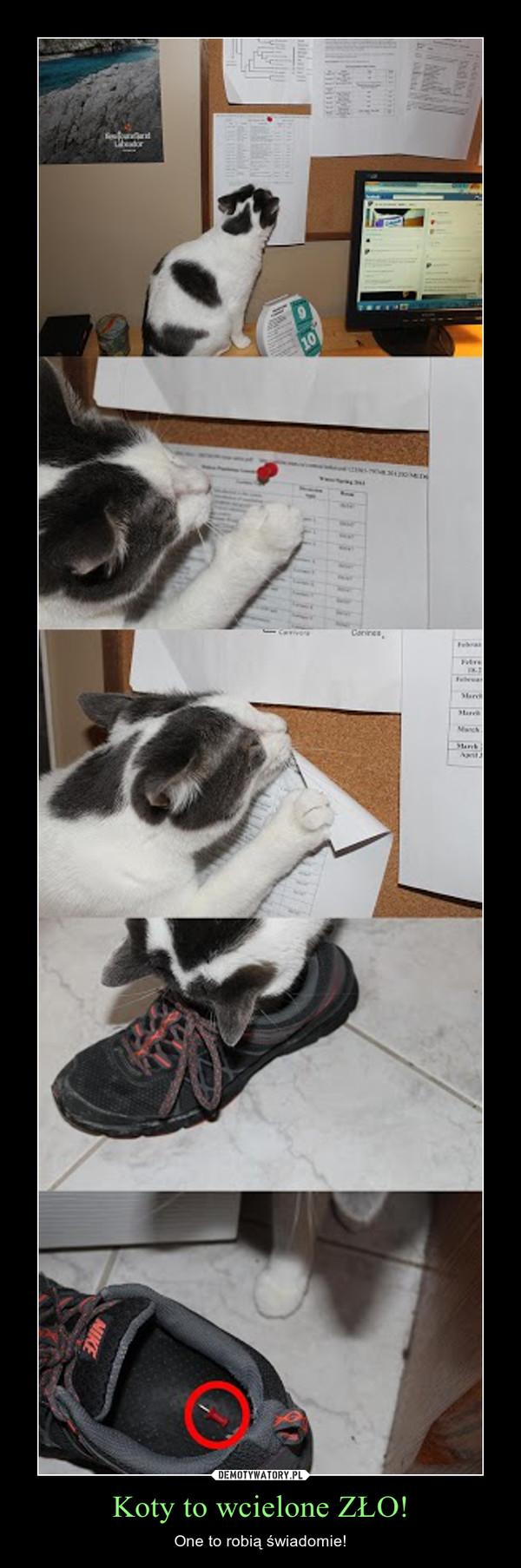 Koty to wcielone ZŁO! – One to robią świadomie!