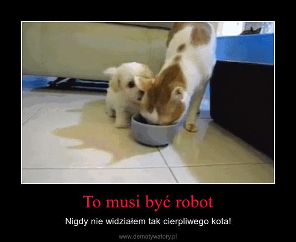 To musi być robot – Nigdy nie widziałem tak cierpliwego kota!