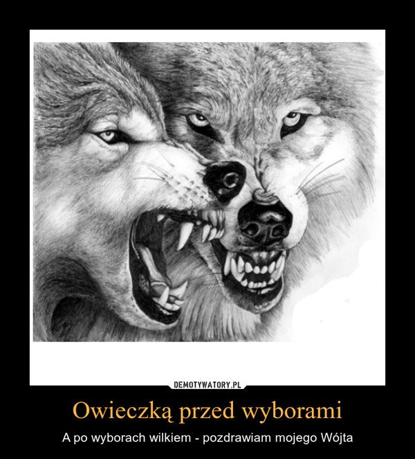 Owieczką przed wyborami – A po wyborach wilkiem - pozdrawiam mojego Wójta