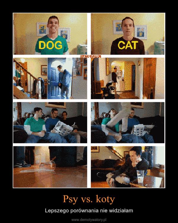 Psy vs. koty – Lepszego porównania nie widziałam