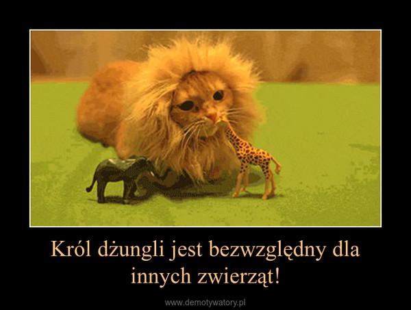 Król dżungli jest bezwzględny dla innych zwierząt! –