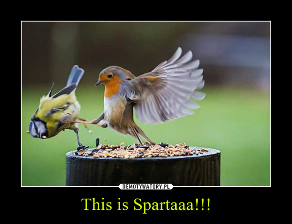 This is Spartaaa!!! –