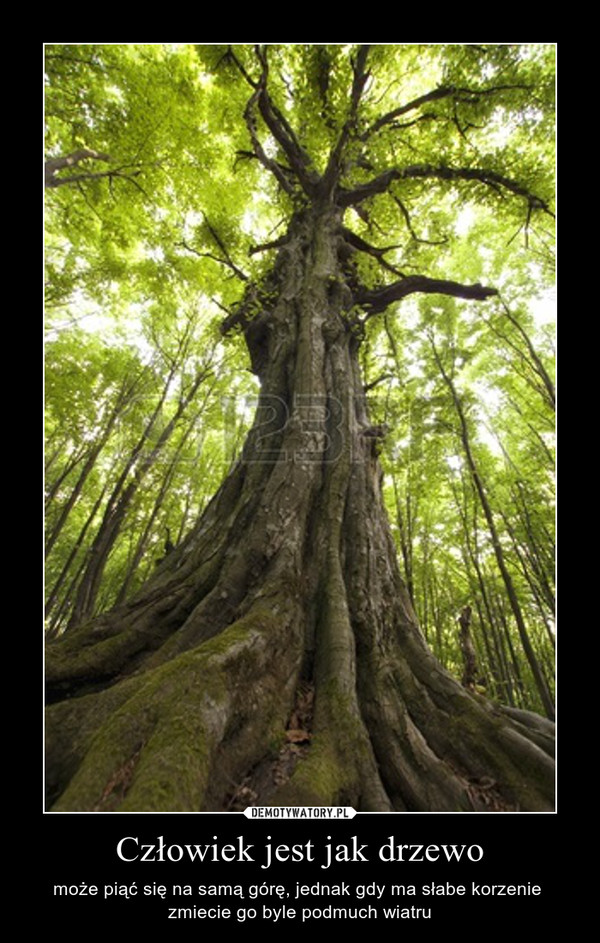 Człowiek jest jak drzewo – może piąć się na samą górę, jednak gdy ma słabe korzenie  zmiecie go byle podmuch wiatru