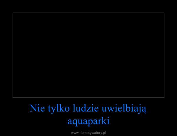 Nie tylko ludzie uwielbiają aquaparki –