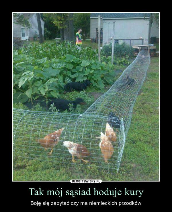 Tak mój sąsiad hoduje kury – Boję się zapytać czy ma niemieckich przodków