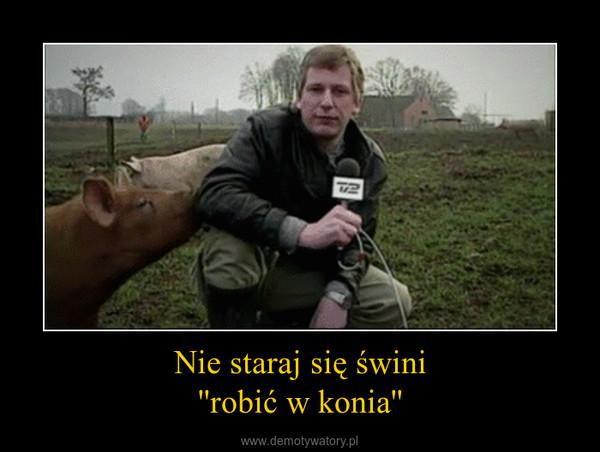Nie staraj się świni''robić w konia'' –