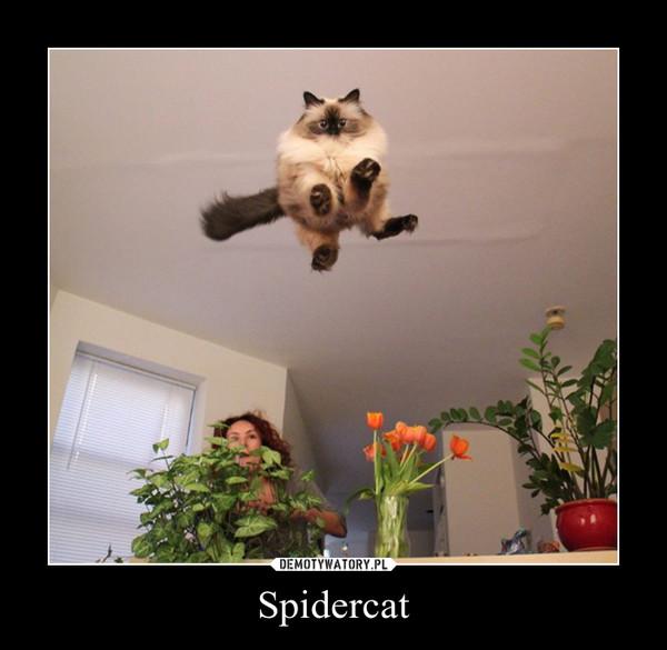 Spidercat –