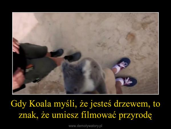 Gdy Koala myśli, że jesteś drzewem, to znak, że umiesz filmować przyrodę –