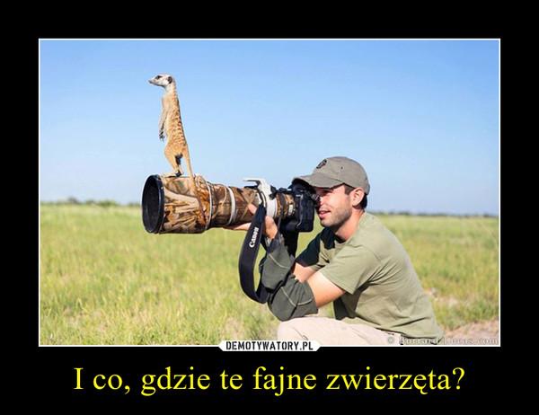 I co, gdzie te fajne zwierzęta? –