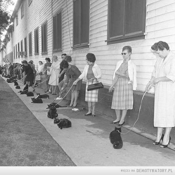 Casting ''czarnych kotów'' –