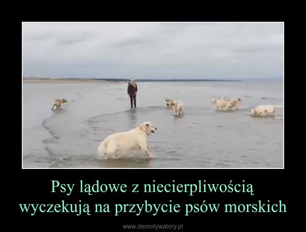 Psy lądowe z niecierpliwością wyczekują na przybycie psów morskich –