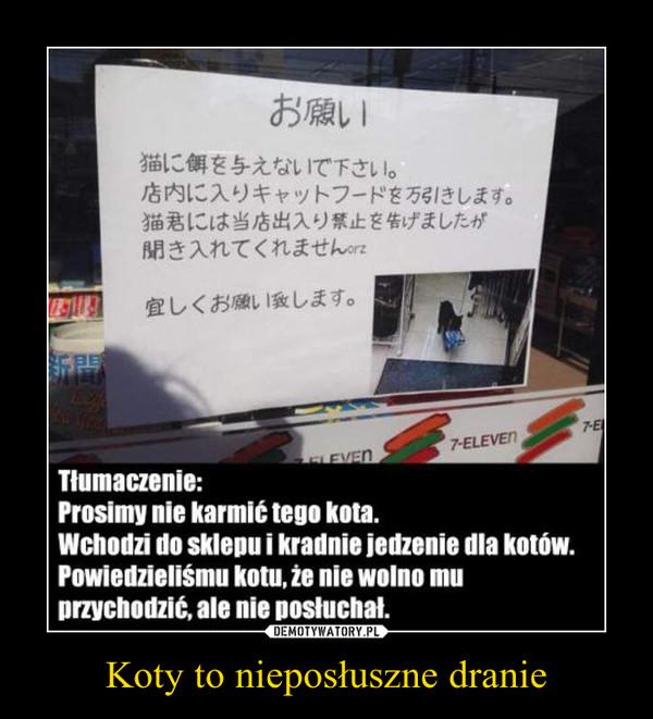 Koty to nieposłuszne dranie –  Tłumaczenie:Prosimy nie karmić tego kota.Wchodzi do sklepu i kradnie jedzenie dla kotów.Powiedzieliśmy kotu, że nie wolno muprzychodzić, ale nie posłuchał.
