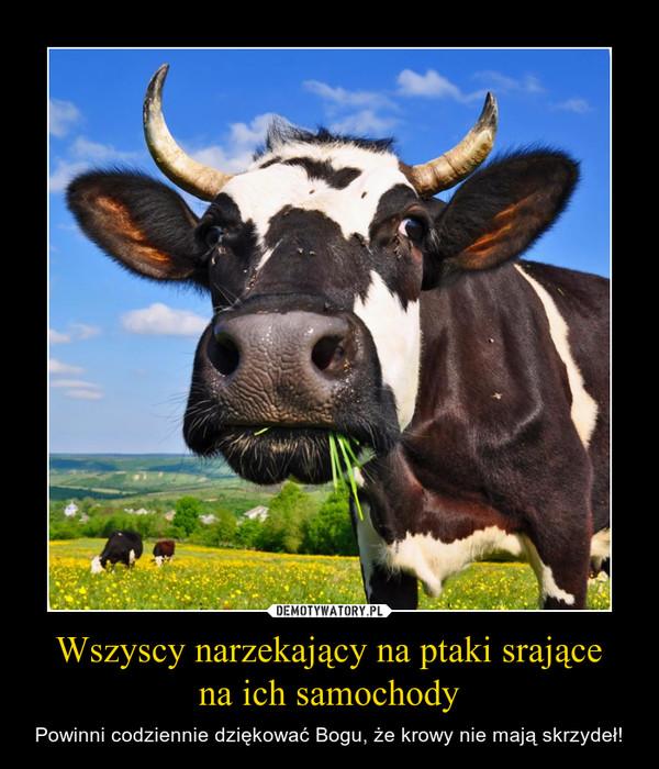 Wszyscy narzekający na ptaki srającena ich samochody – Powinni codziennie dziękować Bogu, że krowy nie mają skrzydeł!