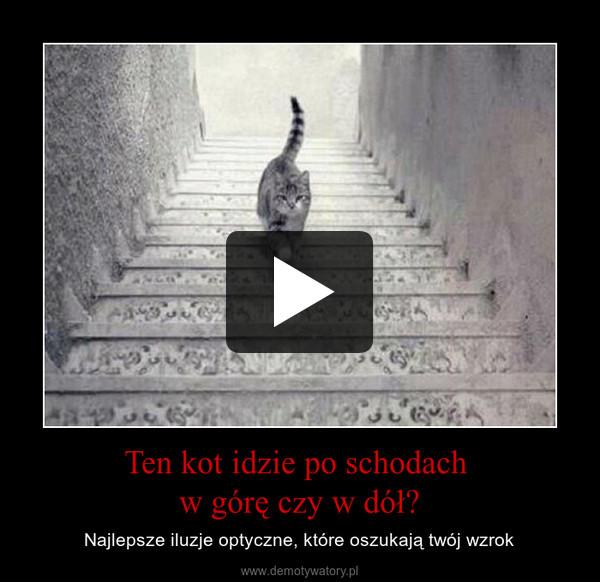 Ten kot idzie po schodach w górę czy w dół? – Najlepsze iluzje optyczne, które oszukają twój wzrok