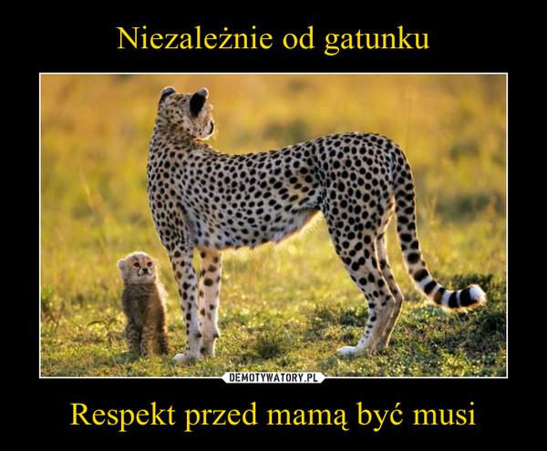 Respekt przed mamą być musi –