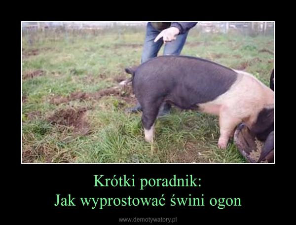 Krótki poradnik:Jak wyprostować świni ogon –