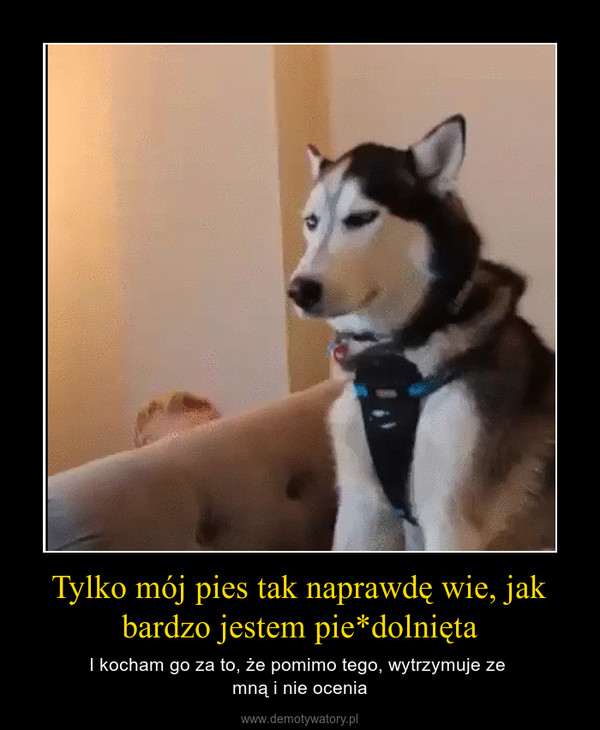 Tylko mój pies tak naprawdę wie, jak bardzo jestem pie*dolnięta – I kocham go za to, że pomimo tego, wytrzymuje ze mną i nie ocenia